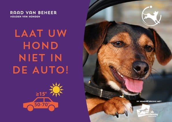 hond in auto stopper