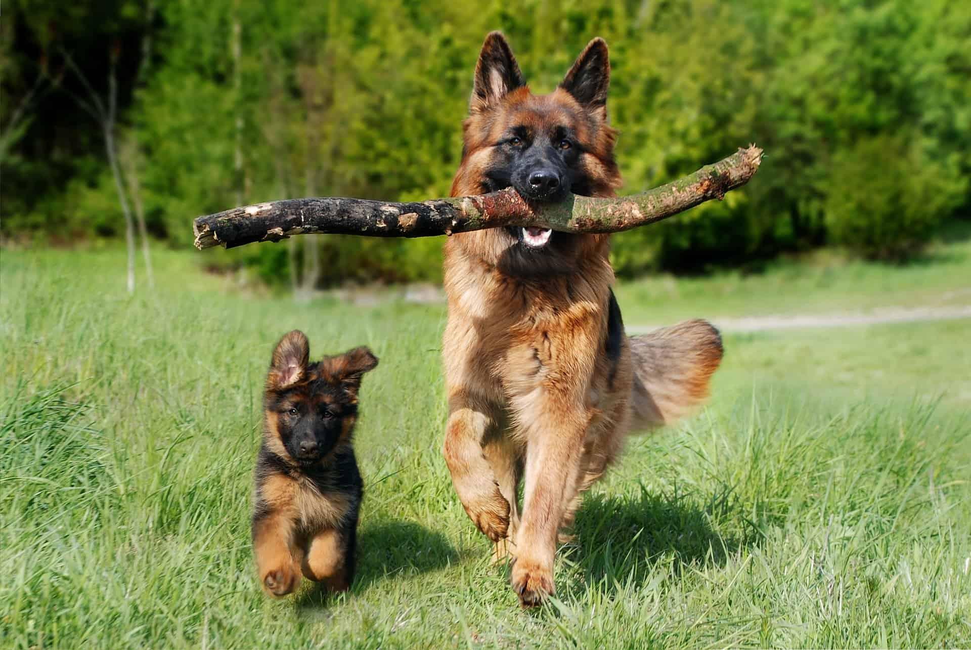 Jachttraining hond