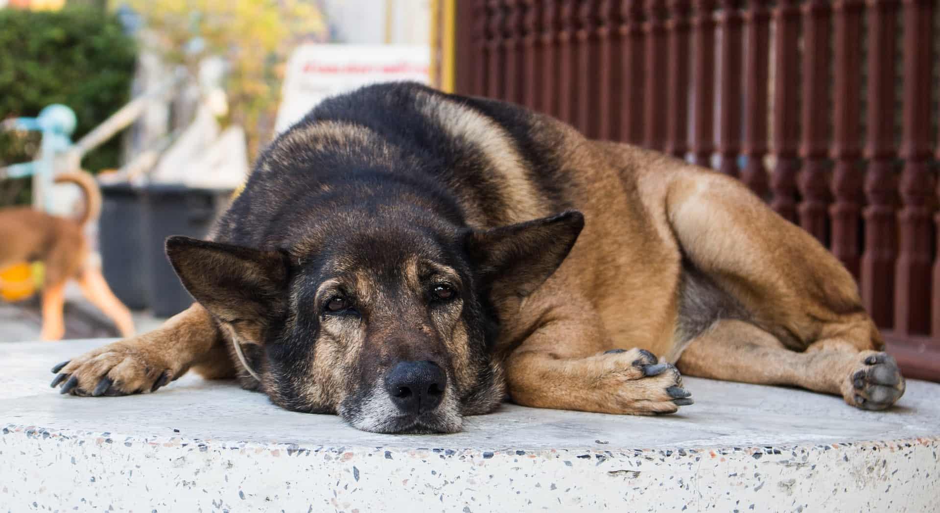 Wat mogen honden niet eten