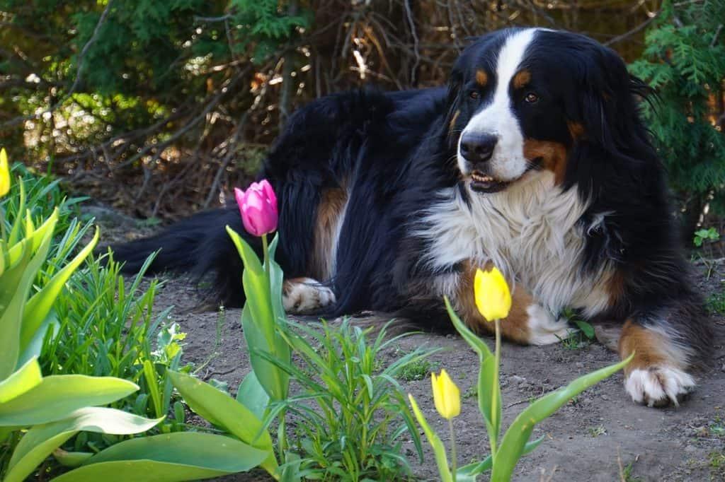 Hond gestoken door wesp
