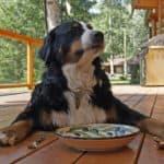 Hond laten inslapen