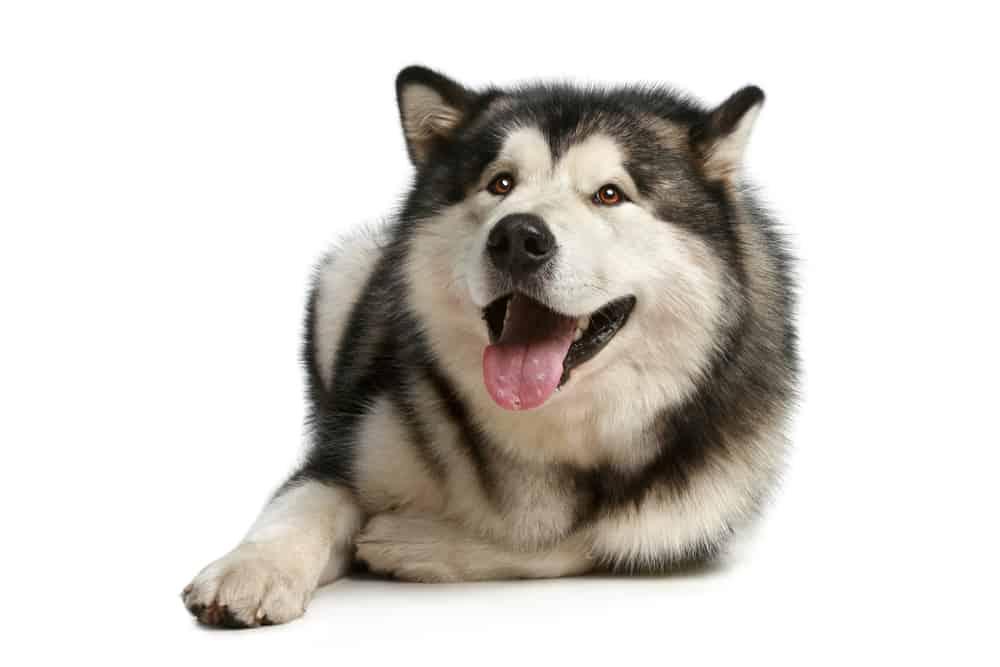 Best hondenbrokken