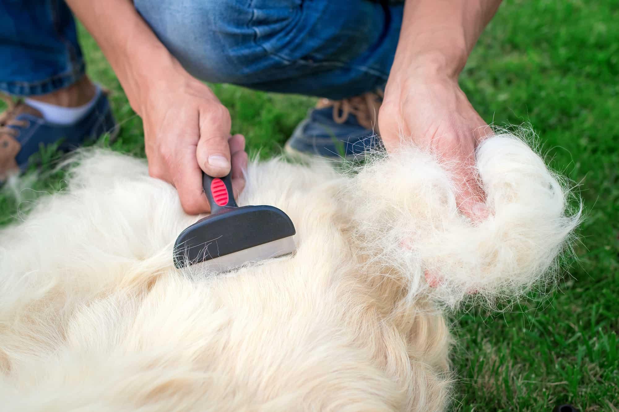 Hond borstelen