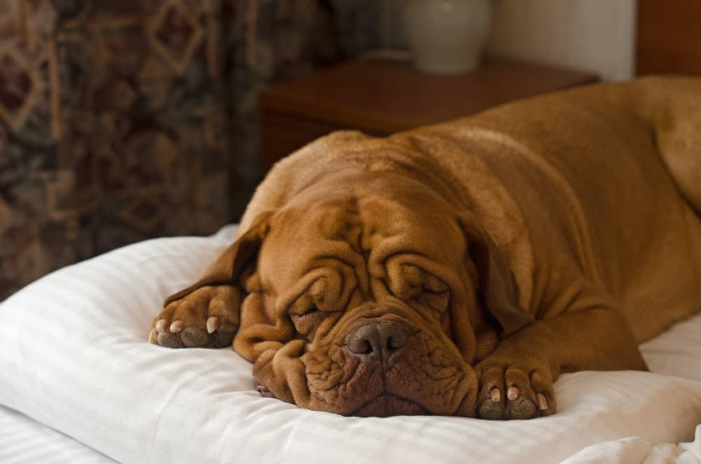Orthopedisch hondenkussen