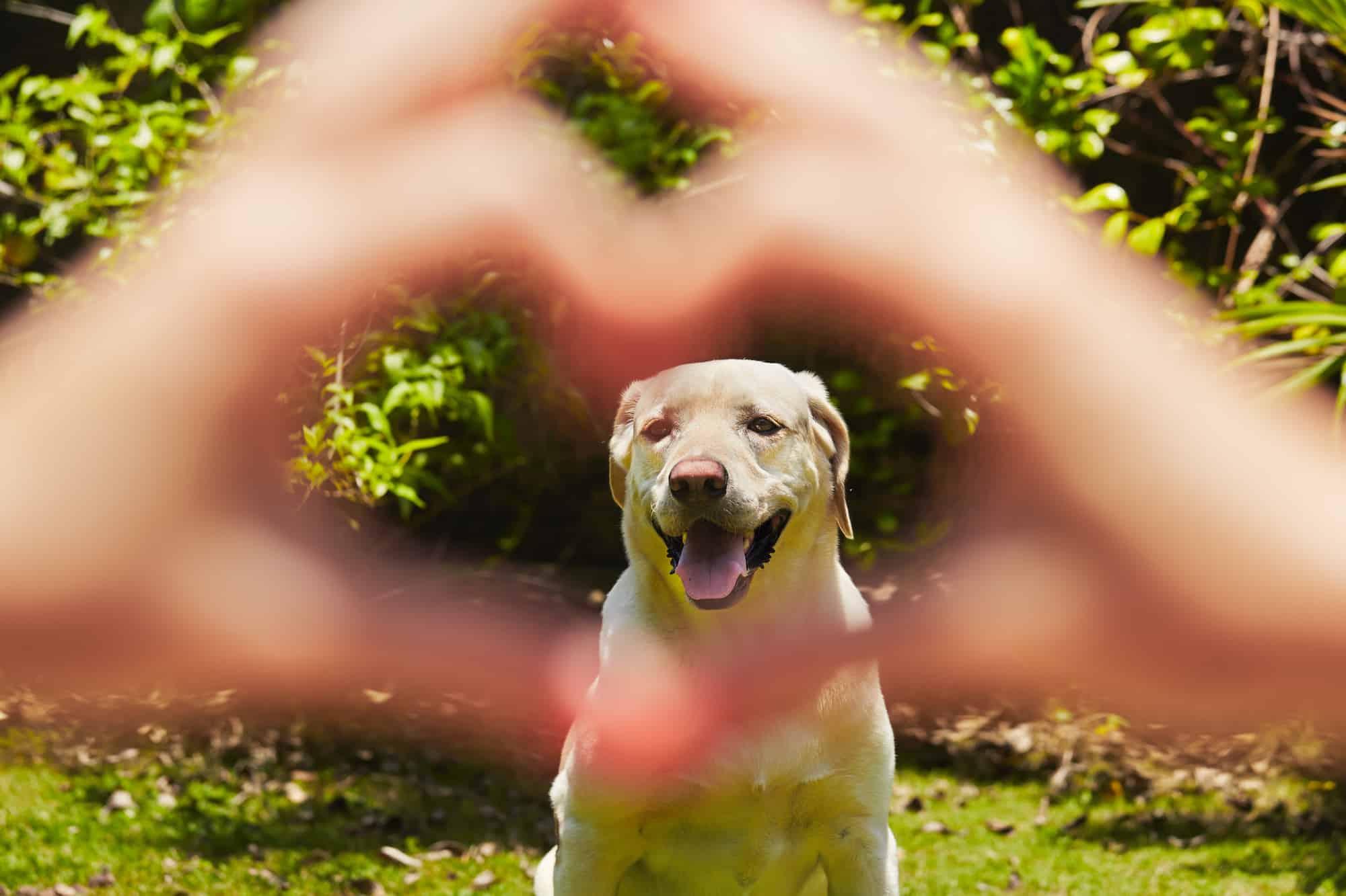 Hondenluik chip