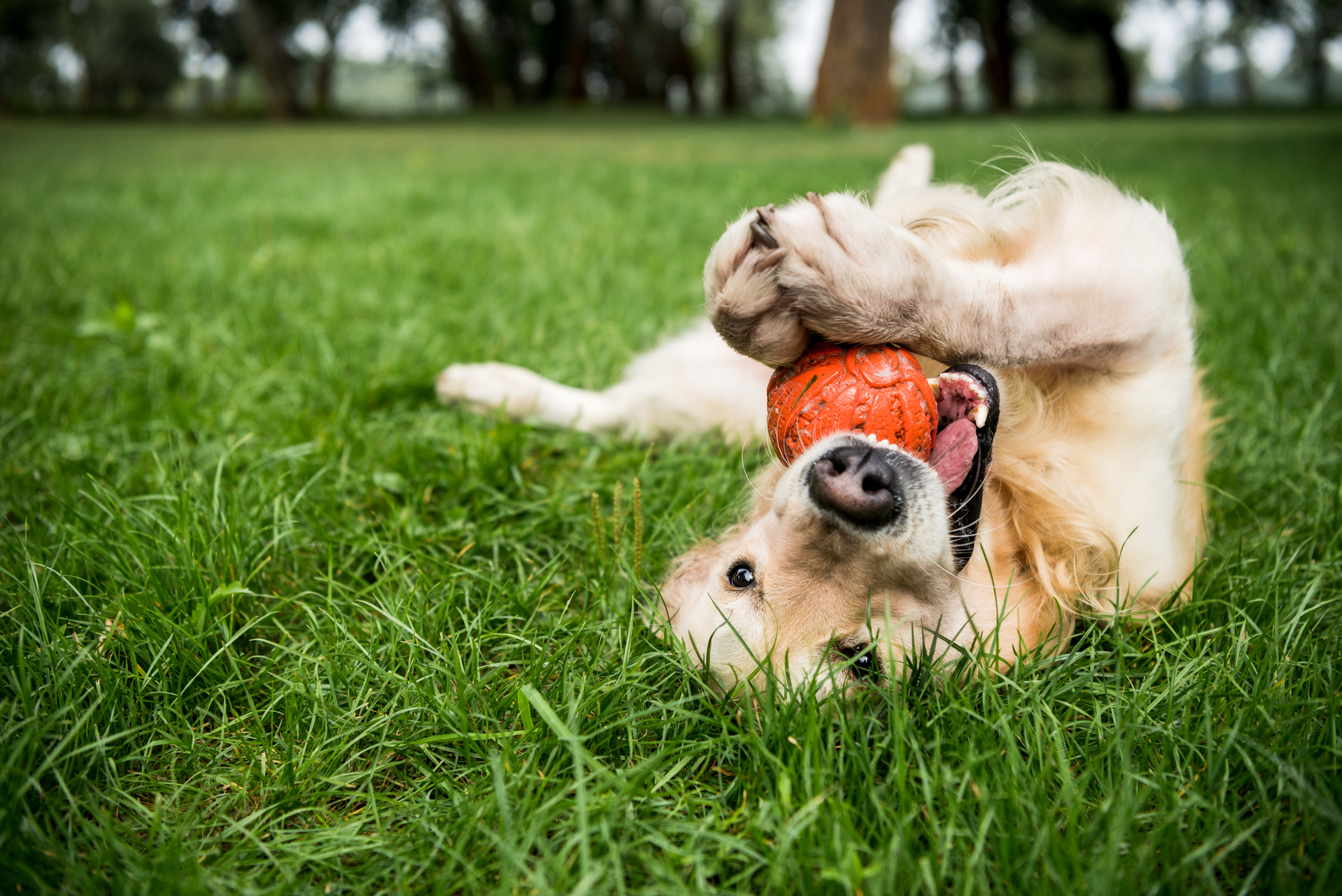 Leukste hondenspeeltjes