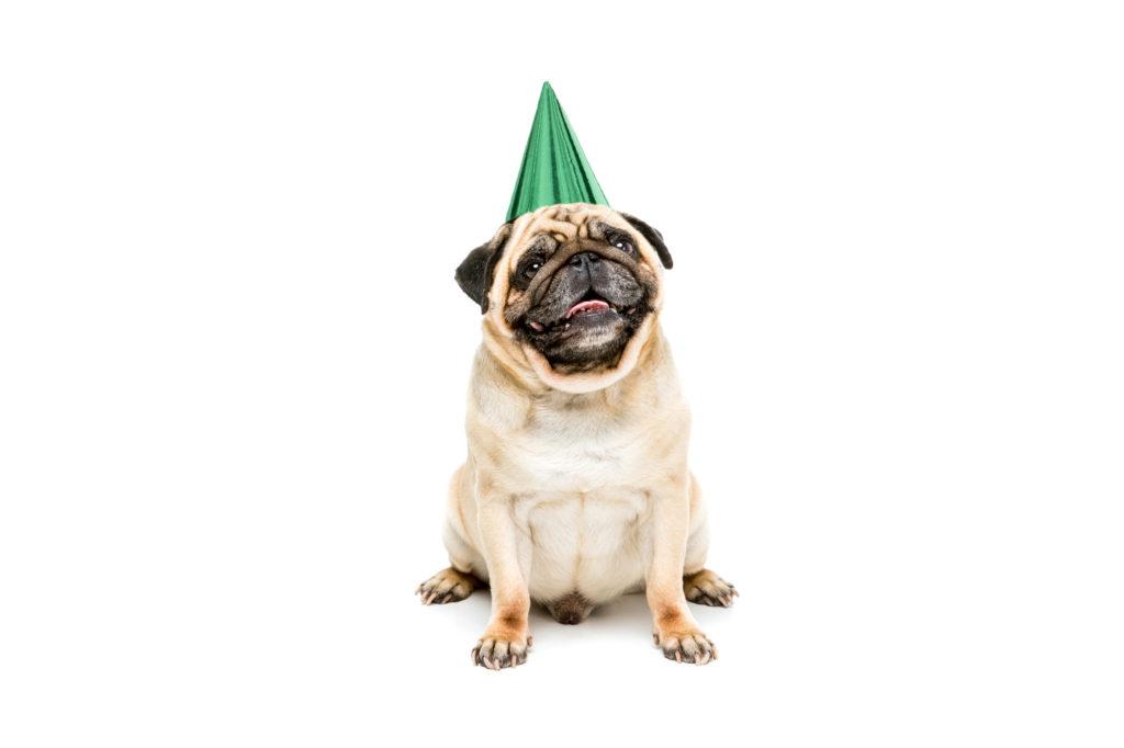 Honden verjaardag