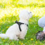 Hondenpoepzakjes