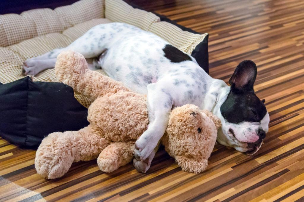 Honden knuffels