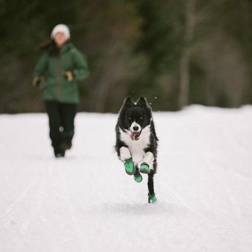 Hondenschoenen winter